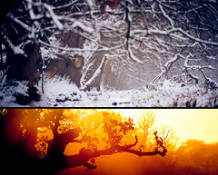 (andrew evans.) Tags: lighting morning trees winter light summer england sun white mist snow cold tree nature misty fog fairytale forest sunrise landscape lost golden countryside kent woods nikon diptych bokeh snowy tunnel ethereal lonely rays emotional sunrays wonderland storybook magical 70200 f28 enchanted d3 400mm