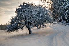 Morgenstimmung (.Steffen) Tags: schnee winter landschaft exposureblend remstal