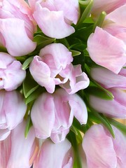 Tulips for Christmas (evisdotter) Tags: pink flowers reflections tulip blommor tulpan