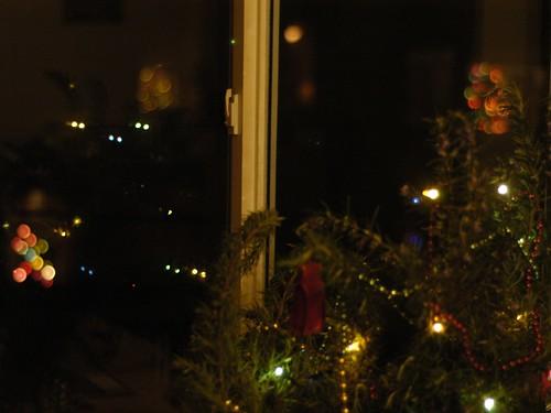 Rosemary Tree 12