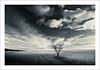 195 (Mariano Belmar Torrecilla) Tags: bw paisajes blancoynegro landscape paisaje murcia cagitan ostrellina fotoenclave redmatrix