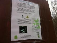 Cerulean Warbler Sign