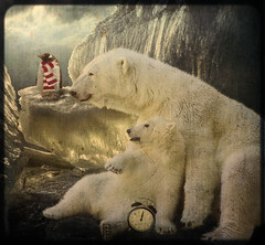 Happy New Year!! 2011 (Danica (Mariella Tammas)) Tags: texture animals bears astratto atmosfera orsi effetto elaborazione suggestione truthandillusion