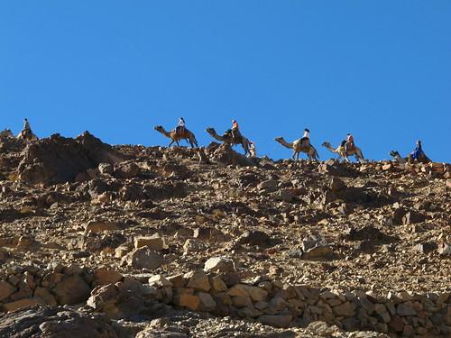 Some Folks take a Camel up Mt Sinai