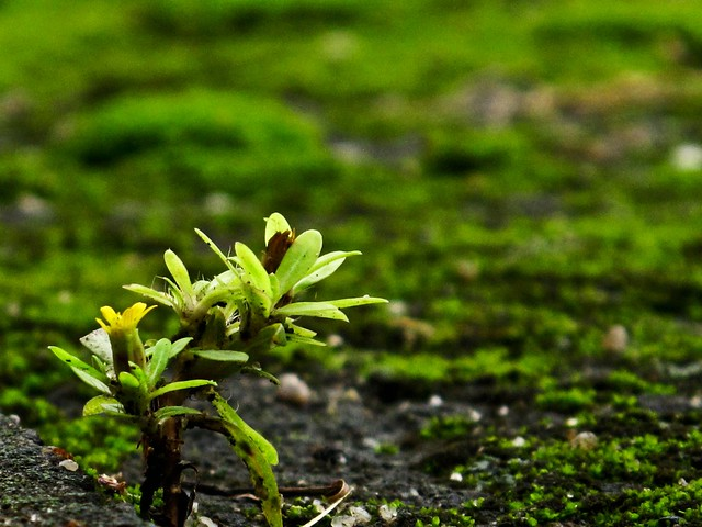 IMG_1661 Nature -green