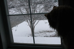 Jasper watches the snow