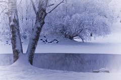 Pielisjoki (hillitty) Tags: winter reflection nature cg joensuu winterreflection pielisjoki reflectiononwater bluemoment finnishnature winterinfinland riverpielinen