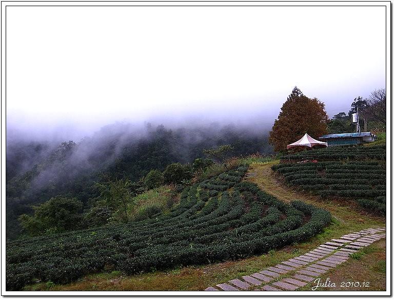 玉蘭茶園 (10)