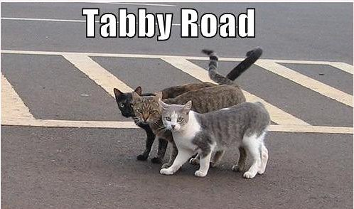 tabby-road