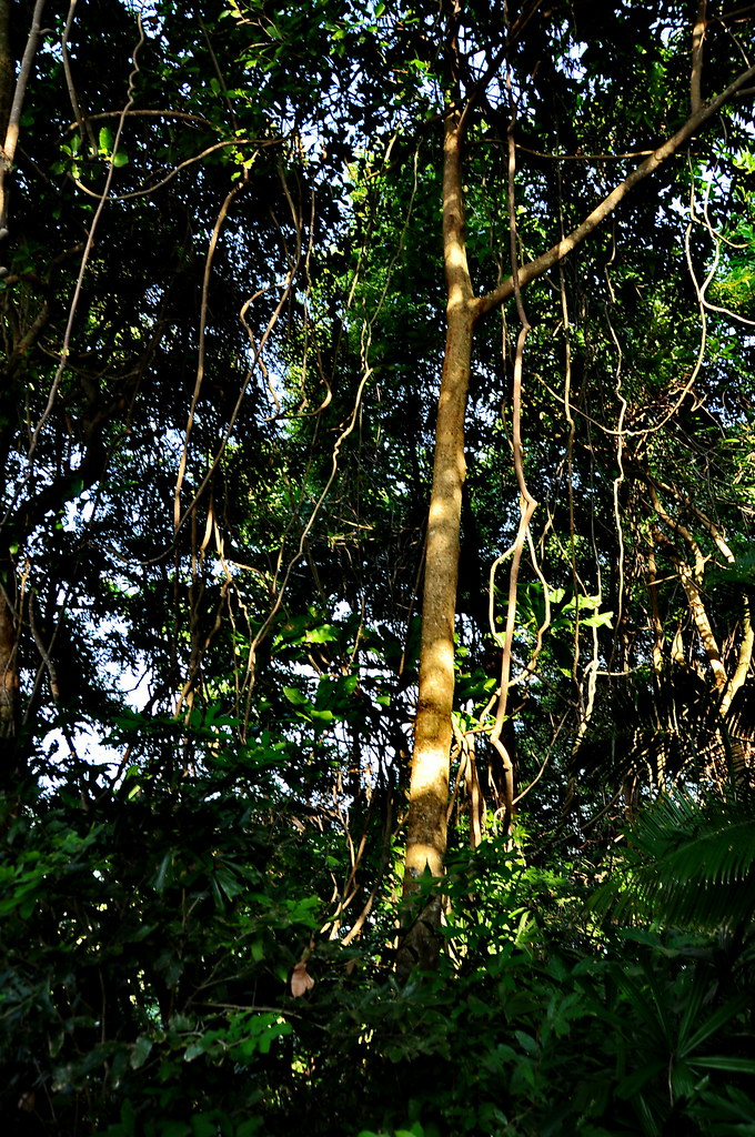 лес 2