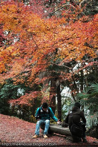Kyoto 京都 - Tetsugaku no Michi 哲学の道