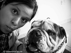 Look at the camera! (Valentina Vitols) Tags: blackandwhite bw pet love blancoynegro dogs amor venezuela selfportraits bulldog bn dora caracas perros autorretrato mascota goodgirl