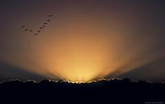 Lets Fly Away. 13|365 (Dejenee Renee.) Tags: lighting sunset sun birds project day dominican republic renee 365 13 dejenee