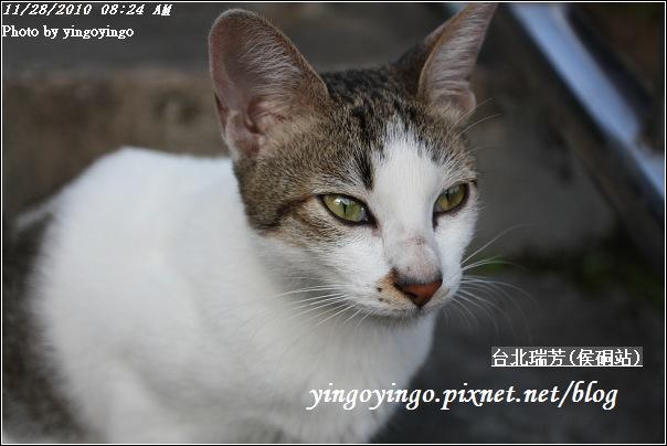 台北瑞芳(侯硐站)貓村20101128_I5592