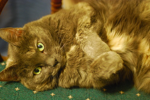 Fluffy posing