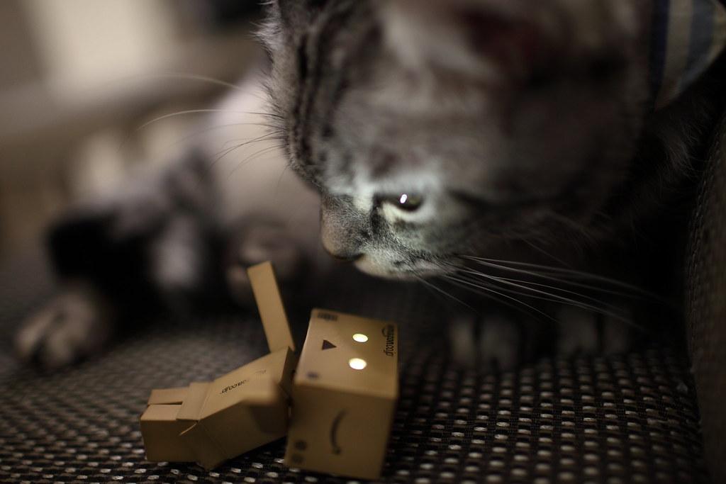 貓貓與阿楞