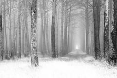 a foggy day (David Portilla) Tags: niebla