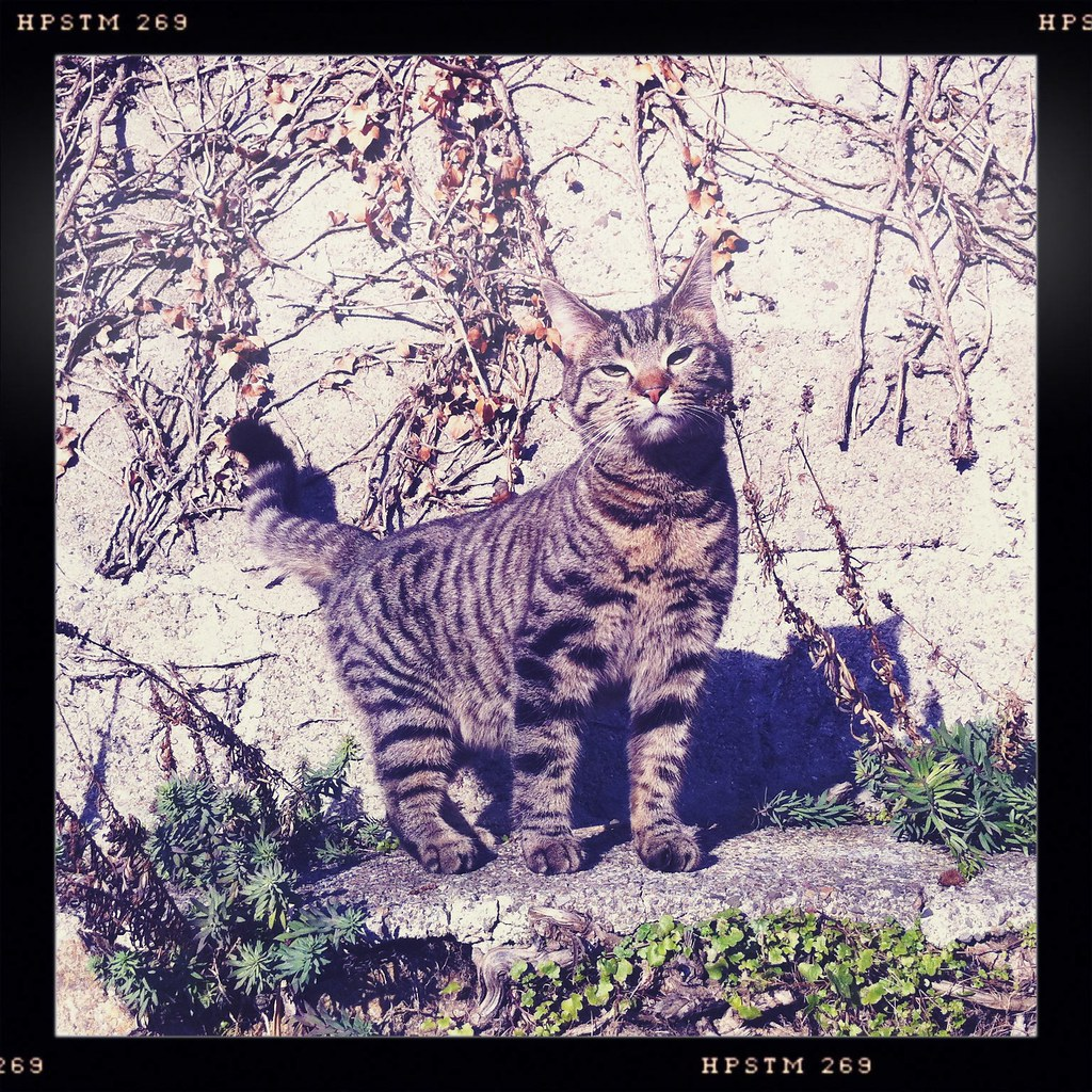 831e7957b9e078 Into the Wild (andrewgrier) Tags  cat garden fia iphone hipstamatic