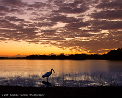 Dawn of a New Day (Michael Pancier Photography) Tags: birds sunrise madera flamingo evergladesnationalpark nationalparks floridabay woodstork commercialphotography naturephotographer michaelpancierphotography avianphotography ninemilepond landscapephotographer fineartphotographer michaelapancier wwwmichaelpancierphotographycom