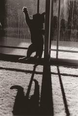 35mm (Miranda McDonald) Tags: california white black film contrast minolta x livermore 700