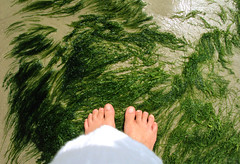 (lizianekugland) Tags: sea people color feet praia beach self sand pessoas areia vegetation pés