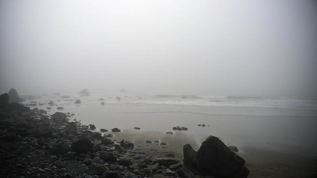 foggy muir beach