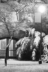 Snow covered (daniel.lih.photography) Tags: seattle street door winter light bw white snow plant black building tree ice uw lamp weather bike bicycle bulb night contrast hall washington nikon university branch branches january entrance flake mercer cover covered cycle snowing 雪 黑白 2011 d90 西雅圖 華盛頓大學 華大 daniellih