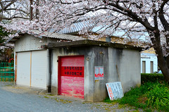 Miyaki Town Volunteer Fire Department (pokoroto) Tags: red flower japan fire town spring flora shutter april  sakura volunteer saga department nagasaki kyushu   4 miyaki 2011  uzuki kaido   shigatsu unohanamonth 23  nakabarushuku