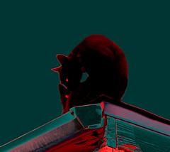 On A Hot Tin Roof (Elliott Niels) Tags: mandela analogreality augmenteddigitalreality poral quantum vacuum universeswallower