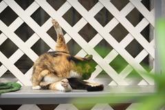 2016930 (Tokutomi Masaki) Tags: 2016   tokyo japan  walk    cat animal
