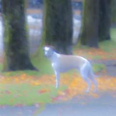 Sunday AM (Manzzan) Tags: dog sunday memories memory fade holloweenmorn