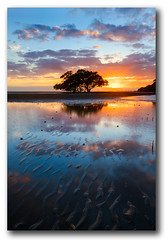 A matter of moments... (Stuart Addelsee) Tags: sea sun reflection tree beach nature water sunrise canon eos sand ripple brisbane explore mangrove 7d lowtide 2011 nudgee nudgeebeach
