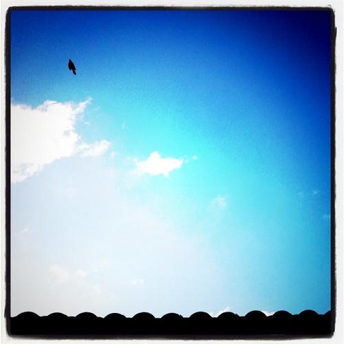 Bird flying over my house