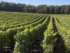 La Rioja: Entregarán equipamiento para viñateros riojanos