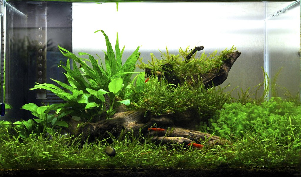 does anyone have pics of a scape using only java moss and