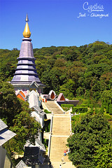 Jedi - Chiangmai (3)