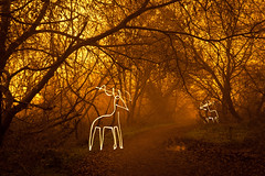 Light Harted (Reindeer Light Painting), Hertfordshire (flatworldsedge) Tags: christmas longexposure trees light cloud mist pool rain fog forest painting reindeer couple glow heart path pair deer antlers trail torch hart sodium silhoutte thicket rickmansworth undergrowth aquadrome persianrug patronus explored yahoo:yourpictures=myautumn yahoo:yourpictures=christmaslights