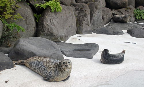 Thumbnail from Reykjavík Zoo & Family Park