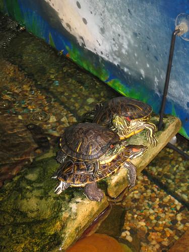 Turtle jenga