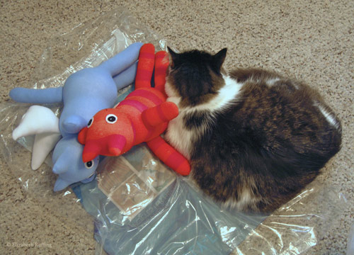 My kitty helper with two sock kittens