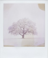 Winter Tree 2 (Lizzie Staley) Tags: winter light white snow tree film catchycolors bristol polaroid sx70 frost 600 expired ashtoncourt cmwdwhite twelveproject