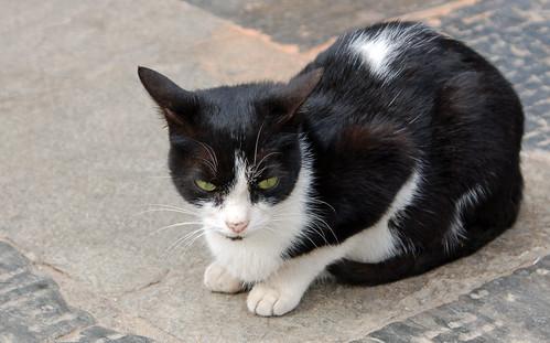1Swayambhunath cat.jpg