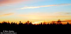 Sunset / Solnedgng (Malinasky) Tags: winter sunset sky sun snow cold sol forest outdoors vinter sweden himmel skog sverige sn solnedgng arboga horisont horizone utomhus kallt
