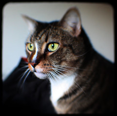 Hunter (DFChurch) Tags: cat hair square fur kodak expression tabby stare expressive express through staring duaflex viewfinder ttv