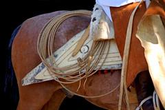 Salta en los tientos... (Eduardo Amorim) Tags: horses horse southamerica argentina caballo cheval caballos lazo cavalos pferde poncho cavalli cavallo gauchos pferd pampa riendas pala apero chevaux gaucho américadosul carona gaúcho campero amériquedusud provinciadebuenosaires recado gaúchos sudamérica sanantoniodeareco suramérica américadelsur areco südamerika pilchas norteños tientos pilchasgauchas recao pampaargentina camperos americadelsud americameridionale campeiros guardamonte campeiro guardamontes eduardoamorim peruvianhorse salteños peruvianhorses peruvianpasohorses peruvianpasohorse cojinillo caballodepasoperuano peyones pampaargentino asidera caballosdepasoperuano cavalosdepasoperuano chevauxpasopéruvien cavalodepasoperuano chevalpasopéruvien peleros sobrepeyón