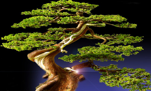 """Bonsai 086 • <a style=""""font-size:0.8em;"""" href=""""http://www.flickr.com/photos/30735181@N00/5261326433/"""" target=""""_blank"""">View on Flickr</a>"""