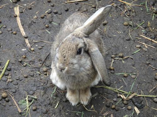 Rabbit at Secret Garden Cotopaxi
