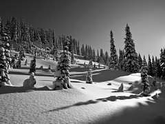 Some of my Best Friends (Christopher J. Morley) Tags: morning light bw ski tree shadows bc garibaldi provincialpark freshsnow wanderung alw snowladen notracks achromatic