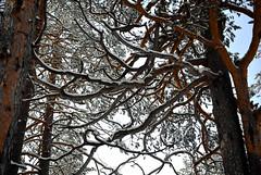 Crooked Tree (Gabriele Ciulli) Tags: blue trees sky italy panorama snow color tree cute cortina nature clouds landscape nikon december view nikkor albero vr 2010 veneto d60 alpino kenko dobbiaco 1685 filtri uvw pro1d