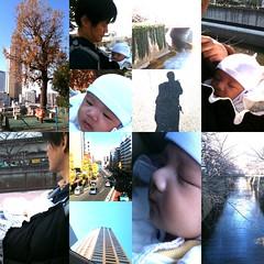 とらちゃんとお散歩(12/18 午前)